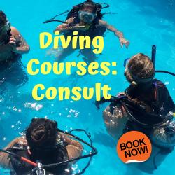 Cursos de Buceo: Consultar (Diving Courses: Consult)